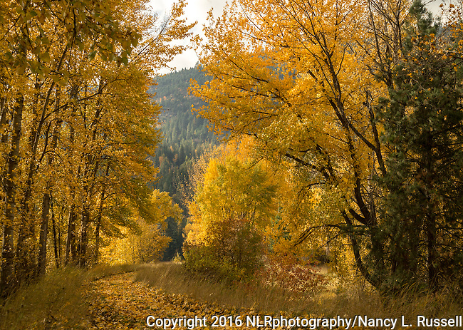 Strolling through the Kootenai National Wildlife Refuge with golden fall leaves lighting up the path