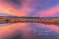 Sunset, Wetlands, Mono Basin National Forest Scenic Area, Inyo National Forest, California