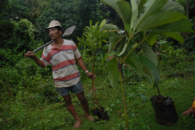 A Filipino man plants trees in Ilocos Norte, Philippines..**For more information contact Kevin German at kevin@kevingerman.com