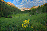 Just down the road from Maroon Lake in the Maroon Bells Wildnerness, yellow Colorado wildflowers add a splash of color to a beautiful summer morning in the Rocky Mountains.