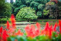 Photo of Kandy Royal Botanical Gardens at Peradeniya, Kandy, Sri Lanka, Asia. This is a photo of the lake at Kandy Royal Botanical Gardens at Peradeniya, just outside Kandy in Sri Lanka, Asia.