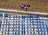 BALTIMORE, MD - MAY 17:  A fan watches from the stands as Lookin At Lee exercises in preparation for the Preakness Stakes this Saturday at Pimlico Race Course on May 17, 2017 in Baltimore, Maryland.(Photo by Scott Serio/Eclipse Sportswire/Getty Images)