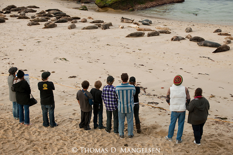 People watch harbor seals from behind a rope on the beach in La Jolla, California.