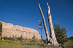 An old dead tree standing near the Chinese Wall in the Bob Marshall Wilderness in Montana