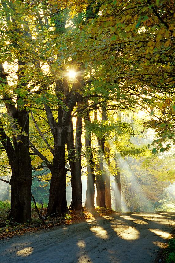 Trees silohuetted against sunrise through fog, Lyndon, Caledonia County, V