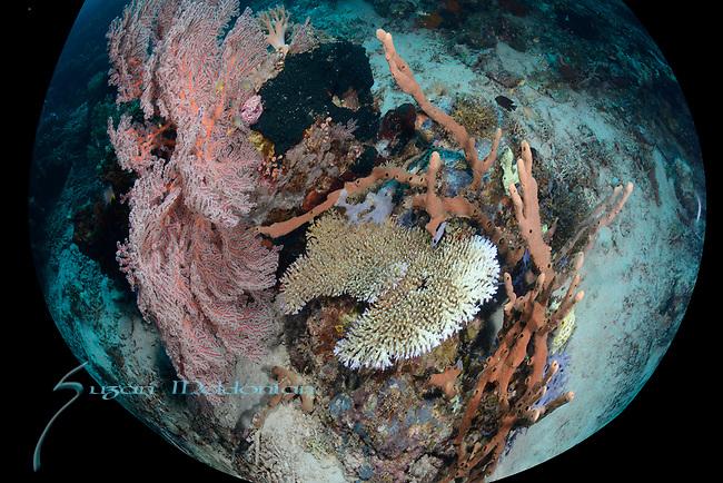 Larantuka, eastern end of Flores Island, East Nusa Tenggara, Indonesia. ,
