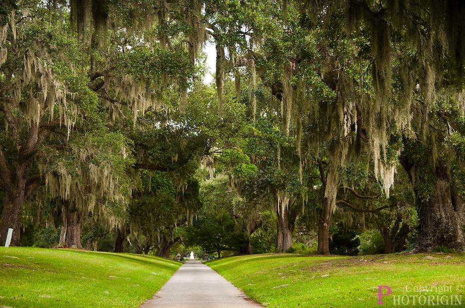 On the way to lowcountry garden, a beatuful greenish trail path with trees on either side like arches