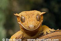Reptiles A to Z