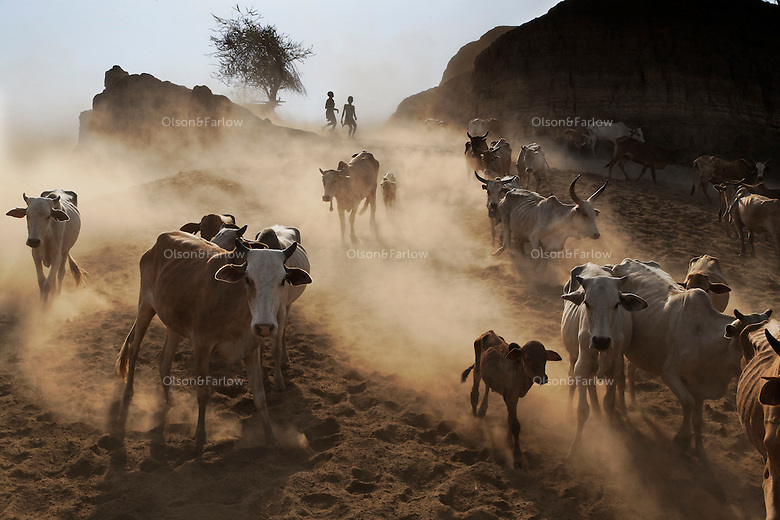 The Omo brings life to both tribes people AND animals.  Owning cows is highly valued and without them a man cannot marry. People in this area would much rather have cows than paper money...This is Boli Crossing near Lake Diba where local pastoralists bring their cows and goats to drink.