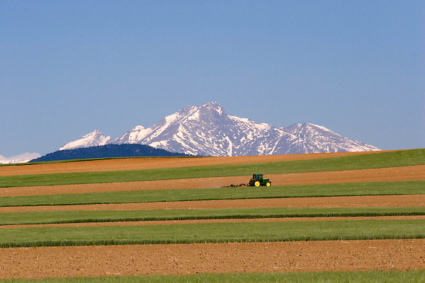 Tractor plowing soil in a wheat field with Longs Peak behind, Boulder, Colorado, USA