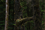 A mix of images from Vancouver Island.