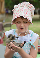 Northern Raccoon (Procyon lotor), young girl holding baby raccoon, Texas, USA
