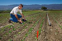 DuPont soil scientist studies lettuce trials, Salinas California