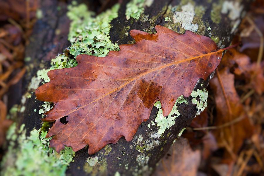 Winter leave over wooden tree log wet.
