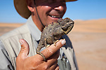 Tommy Collard, wildlife guide, with Namaqua chameleon (Chamaeleo namaquensis), Namib Desert, Namibia, April 2013