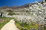 Spring landscape in the Jerte Valley. April 17 , 2013.(ALTERPHOTOS/Alconada)