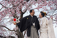 Japan, Kyoto. Couple getting wedding photos taken with cherry blossoms by the river.