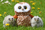 Owlets find comfort as they cuddle up to a toy owl at Liberty's Owl, Raptor & Reptile Centre