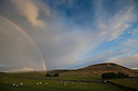 20/08/14 <br /> <br /> A rainbow at first light over Rushup Edge and Mam Tor follows a cold night in the Derbyshire Peak District.<br /> <br /> All Rights Reserved: F Stop Press Ltd. +44(0)1335 300098   www.fstoppress.com.
