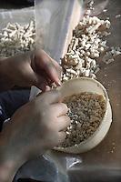 Castelbuono, lavorazione della  manna nell'azienda Gelardi...Castelbuono: producing manna in Giulio Gelardi farm