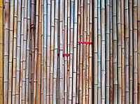 Bamboo_in the streets of Hanoi, Vietnam