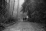 Two people walking along a path in a foggy forest in winter