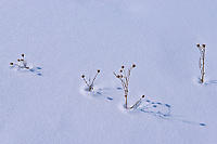 Plants in snow<br />