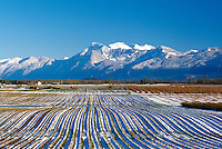 Fraser Valley, BC, British Columbia, Canada - Farm Field of Furrows and Snow, Cascade Mountains, Mount Cheam, Winter