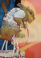 A Rabbit called Nai-na at the Osaka Pet Expo fashion show held from 23rd till 25th September 2011,Japan.<br /> <br /> Photo by Richard Jones