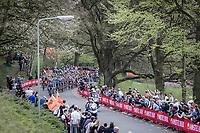 Peloton up the Floorberg. <br /> <br /> 53th Amstel Gold Race (1.UWT)<br /> 1 Day Race: Maastricht &gt; Berg en Terblijt (263km)