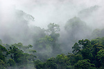 Cloud forest, Barva Volcano National Park, Costa Rica