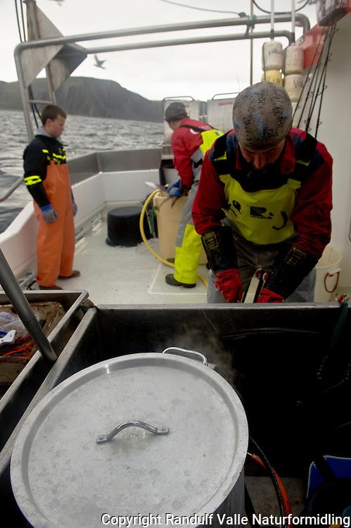 Mann koker kongekrabbe ombord i fiskebåt. --- Man boiling crabs onboard fishing boat.