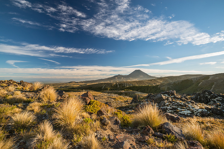 Summer day, early morning of Mount Ngauruhoe with tussocks in foreground. New Zealand - stock photo, canvas, fine art print