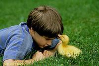 DG12-023x  Pekin Duck - ten day old duckling with boy