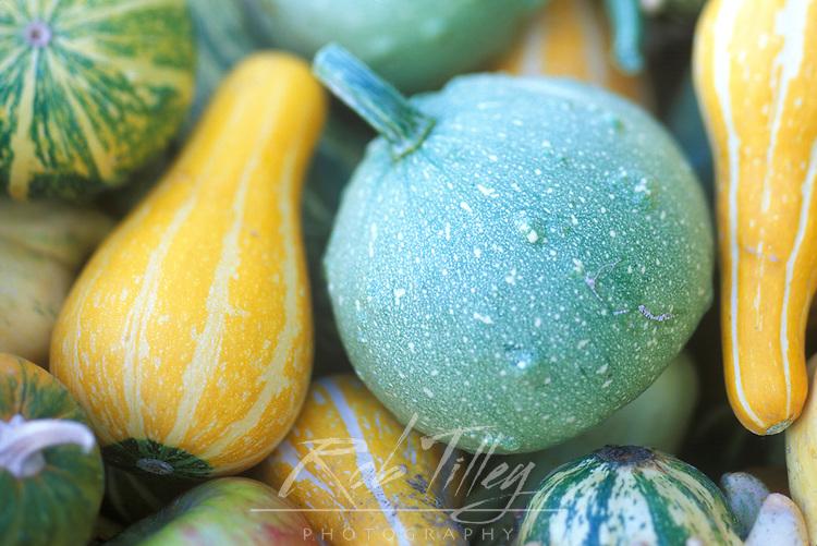 USA, Washington, Chelan County, Gourds(selective focus)