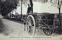 Europe/France/89/Yonne/AOC Chablis: Carte postale ancienne Transport du raisin lors des vendanges