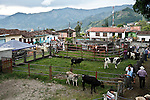 Monthly agricultural fair in the Town of Tamesis