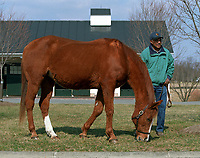 GENUINE RISK, at age 28, Newstead Farm, Upperville, VA, March 2005.