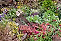 Rustic antiques in garden, flea market finds, old things with vivid flowers, Heuchera in bloom, Tanacetum, Ornamental grasses, irises, rustic farm tools as ornaments in pretty garden, willow fence, wagon wheels, aged wooden boxes, for charming garden scene