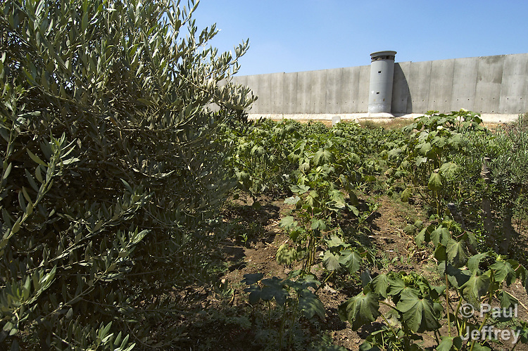 An 8-meter high concrete wall surrounds the West Bank town of Qalqilya.