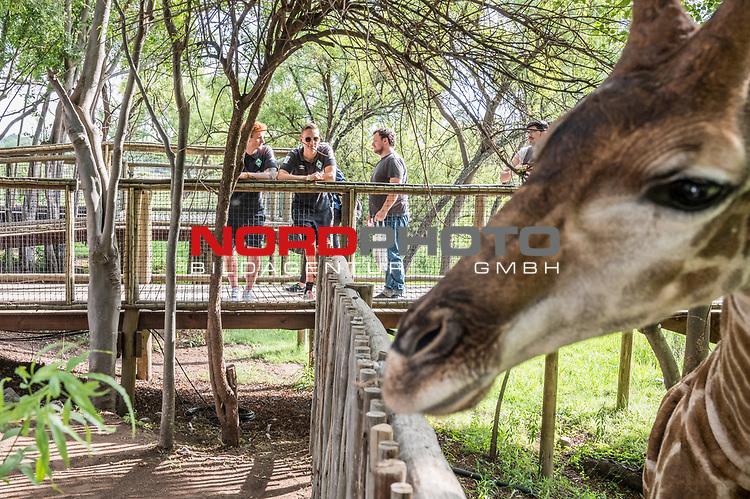 07.01.2019, Lion & Safari Park, Broederstroom, Kalkheuvel, RSA, TL Werder Bremen Johannesburg Tag 05<br /> <br /> im Bild / picture shows <br /> Joshua Sargent (Werder Bremen #19), Ludwig Augustinsson (Werder Bremen #05), eine Giraffe, <br /> <br /> Teil der Spieler besucht am 5. Tag des Trainingslager eine geführte Tour im Lion & Safari Park, <br /> <br /> Foto © nordphoto / Ewert