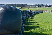 Big bale silage, Winmarleigh,Lancashire.