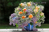 Carl, FLOWERS, photos, SWLA3979,#f# Blumen, Natur, flores, naturaleza