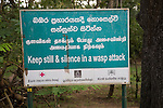 Warning sign about wasp attack, Sigiriya, Central Province, Sri Lanka, Asia