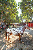 MEXICO, San Pancho, San Francisco, La Patrona Polo Club, a horse stands amongst the stables