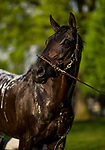 LOUISVILLE, KY - MAY 02: Beach Patrol poses during a bath at Churchill Downs on May 2, 2018 in Louisville, Kentucky. (Photo by Alex Evers/Eclipse Sportswire/Getty Images)