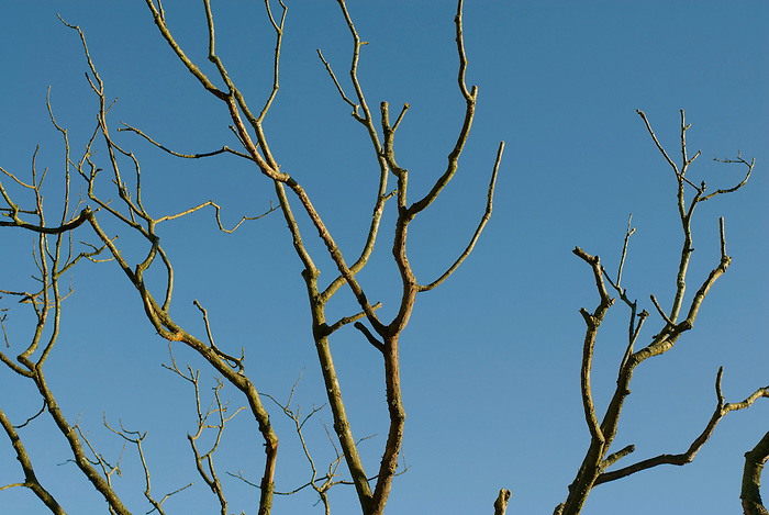 Dead tree branches silhouetted against a bright blue evening sky