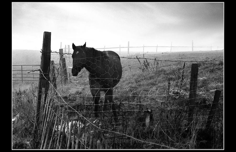 Horse at Sandy Lane, Saltney, near Chester - 1985