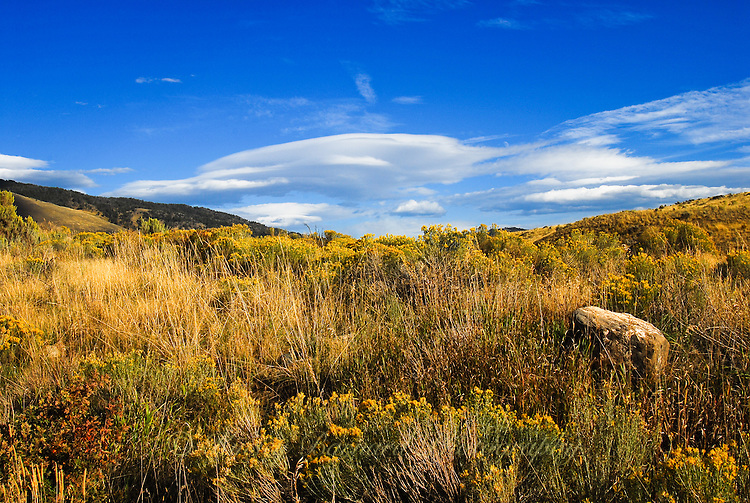 Sage brush and the famous Montana big sky with billowy white clouds passing by.