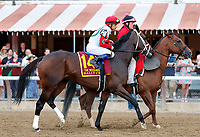 Rally Cry in the post parade as Yoshida (no. 1), wins the Woodward Stakes (Grade 1), Sep. 1, 2018 at the Saratoga Race Course, Saratoga Springs, NY.    Ridden by  Joel Rosario, and trained by William Mott,  Yoshinda finished 2 lengths in front of Gunnevera (No. 9). (Bruce Dudek/Eclipse Sportswire)
